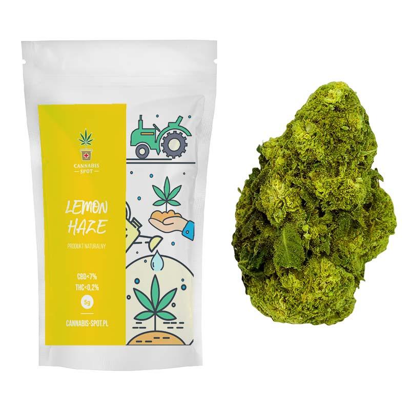 Lemon Haze Susz Konopny CBD 6,5%